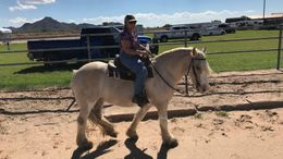Palomino Gypsy Vanner in Queen Creek, AZ