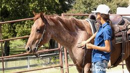 Roan Quarter Horse in Dallas, TX