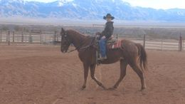 Roan Quarter Horse Cross in Scenic, AZ