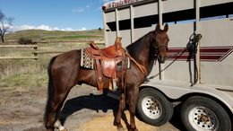 Sorrel Quarter Horse in Omak, WA