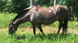 Grulla Other in Finlayson, MN