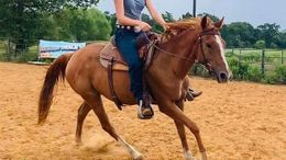 Sorrel Quarter Horse in Dale, TX