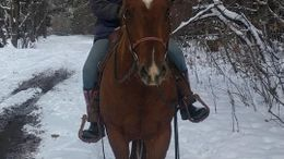 Sorrel Quarter Horse in Cromwell, WI