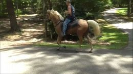 Palomino Tennessee Walker in Atlanta, GA
