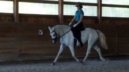 Grey American Warmblood in Westminster, MA