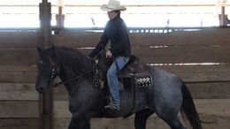Roan Quarter Horse in Denver, CO