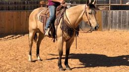 Buckskin Quarter Horse in Kansas City, MO