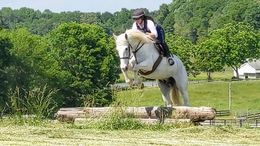 Grey Irish Sport Horse in Westminster, SC