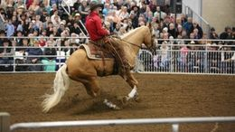 Palomino Quarter Horse in Jud, Alfred, Nortonville, ND
