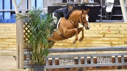Chestnut German Riding Pony in Alpharetta, GA