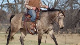Buckskin Quarter Horse in Grand Rapids, MI