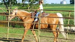 Palomino Quarter Horse in Kingsley, IA