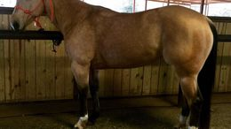 Horses for Sale in Wisconsin - Equine com