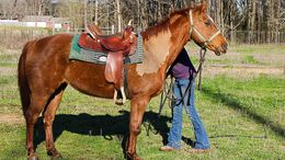 Sorrel Quarter Horse in Ragland, AL