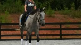 Grey Thoroughbred in Newnan, GA
