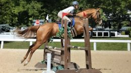 Chestnut Thoroughbred in Nottingham, PA