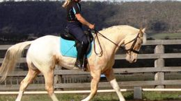 Palomino Appaloosa in New Caney, TX