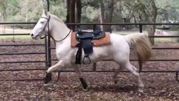 Cremello Quarter Horse in Freeport, FL