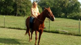 Sorrel Quarter Horse in Leitchfield, KY