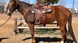 Sorrel Quarter Horse in Las Cruces, NM