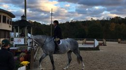 Grey Warmblood in New Market, MD