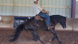 Black Quarter Horse in Pinehurst, TX