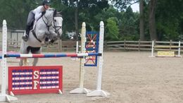 Grey Danish Warmblood in Washington, NJ