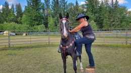 Black Kentucky Mountain Saddle Horse in Portland, OR