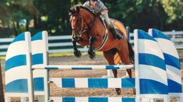 Horse for Sale in