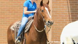 Sorrel Missouri Fox Trotting Horse in Dallas, TX