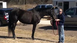Black Thoroughbred in Terrell, TX