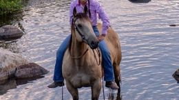Buckskin Quarter Horse in Jackson, MS
