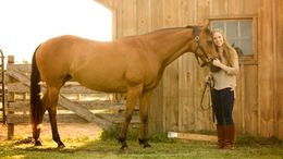 Bay Appendix Quarter Horse in Shrewsbury, PA