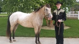Appaloosa Horses for Sale - Equine com