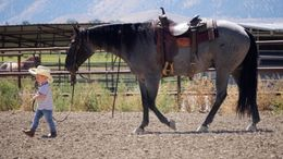 Grey Quarter Horse in North Las Vegas, N Las Vegas, NV