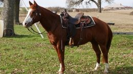 Sorrel Quarter Horse in Jeffersonville, Jeffersonvlle, IN