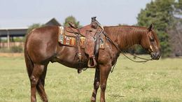 Chestnut Quarter Horse in Sioux Falls, SD