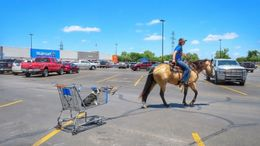 Buckskin Quarter Horse in Billings, MT