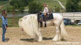 Cremello Gypsy Vanner in Dallas, TX