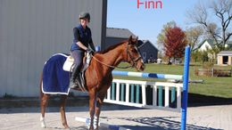 Chestnut Thoroughbred in Monee, IL