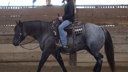 Roan Quarter Horse in Jackson, MS
