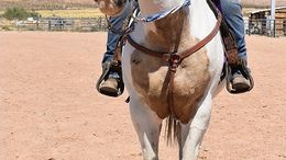 Other Quarter Horse in Beaverdam, AZ