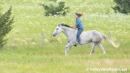Grey Quarter Horse in Forney, TX