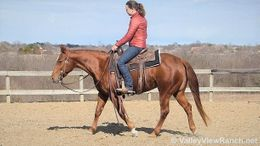 Sorrel Quarter Horse in Dallas, TX