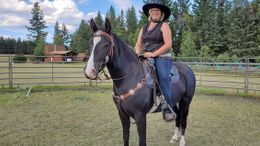 Black Kentucky Mountain Saddle Horse in San Antonio, TX