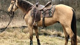 Buckskin Tennessee Walker in Burgettstown, PA