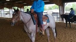 Roan Quarter Horse in Dickson, TN