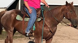 Roan Quarter Horse in Oshkosh, WI