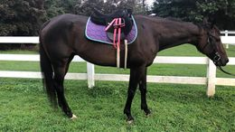 Bay Quarter Horse in Millersville, PA