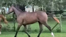 Bay Thoroughbred in Lakeland, FL